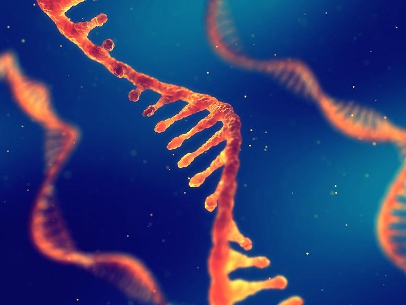 Einzelner RNA-Strang (Ribonukleinsäure). Quelle: AdobeStock nobeastsofierce