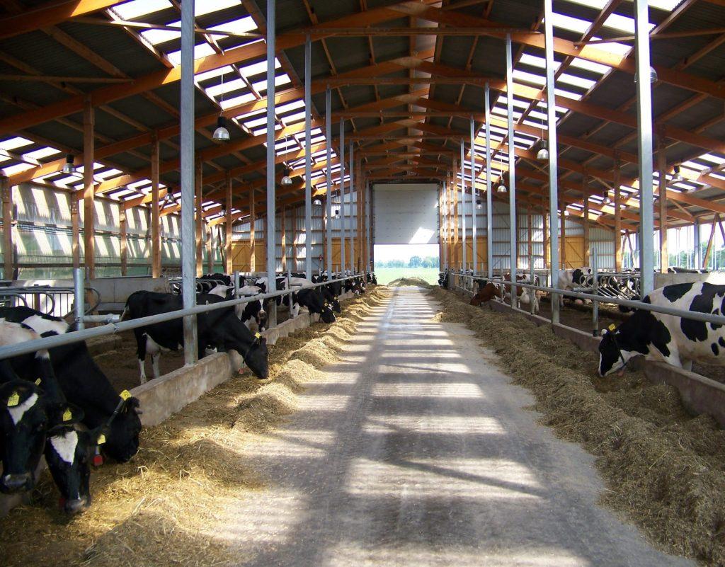 Futtergang auf Milchbauernhof als Bühne für Künstler von KUHltur im Stall
