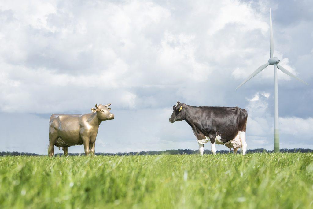 Teilnahme am Milchlandpreis: Statue Goldene Olga neben lebender Kuh im Feld