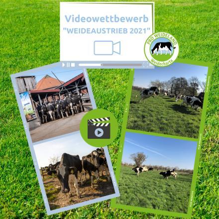 Collage Videowettbewerb Weideaustrieb 2021 von Pro Weideland