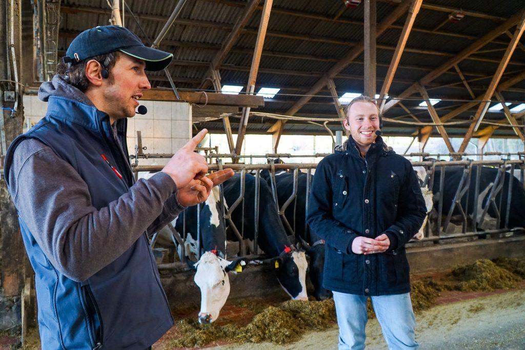 Timo und Sven mit Kühen