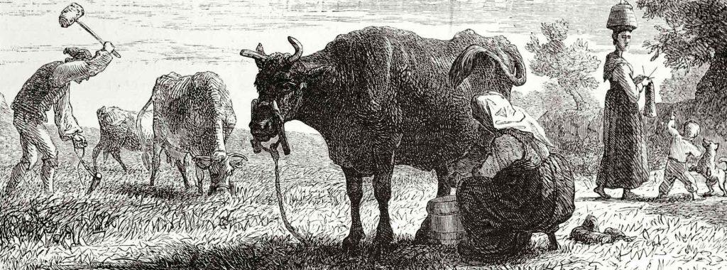 Milchwirtschaft früher
