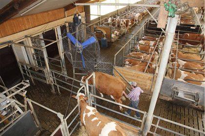 VSG 4.1: Separationsbereiche bei der Rinderhaltung